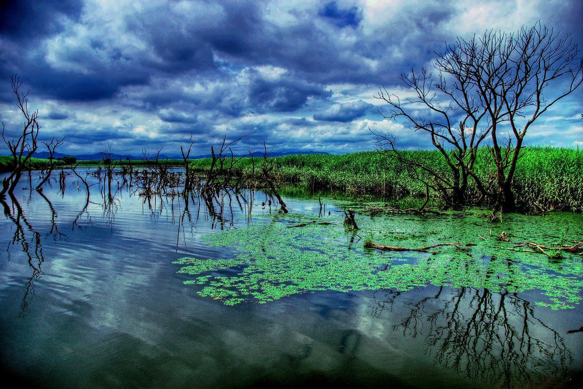 沼地の枯木   自然・風景 > 湖沼   GANREF