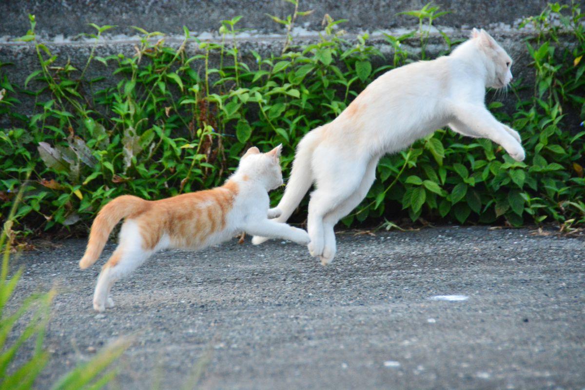 追い かけっこ 猫