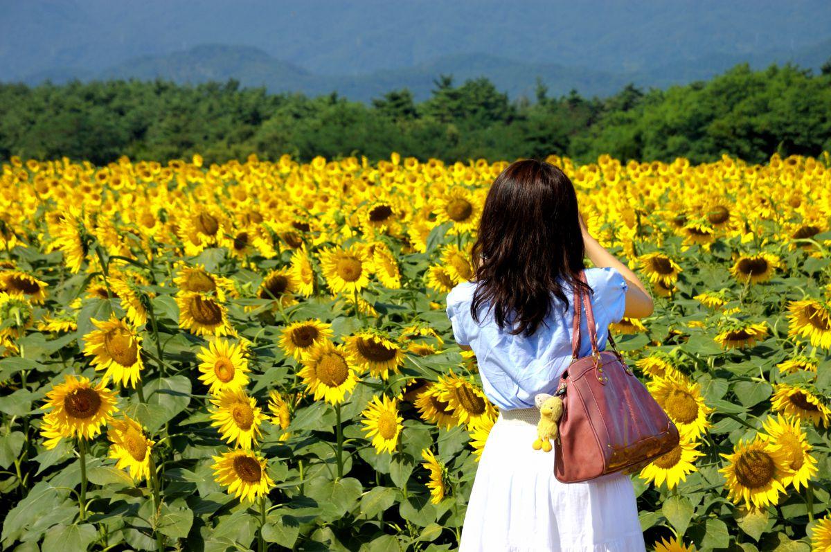 ひまわり畑と女の子 | 人物 > 女性 | GANREF