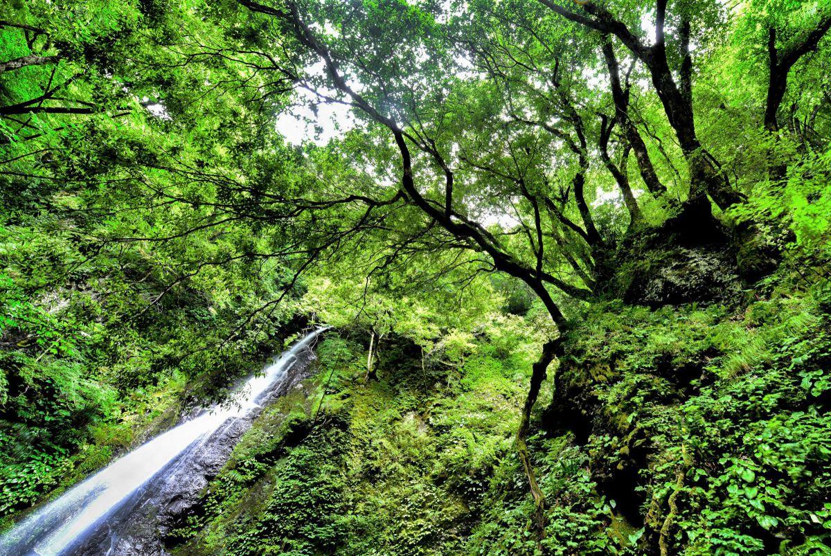 覆いかぶさる木々 滝   自然・風景 > 滝   GANREF