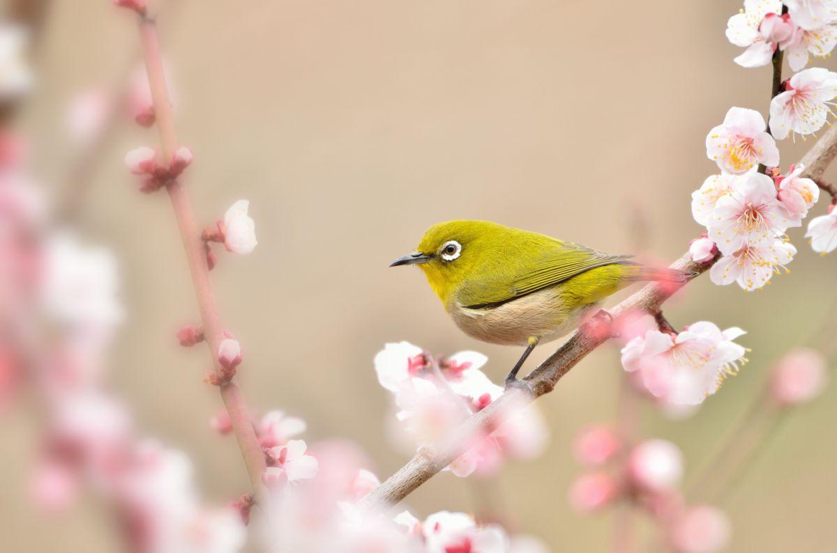 を 告げる 春