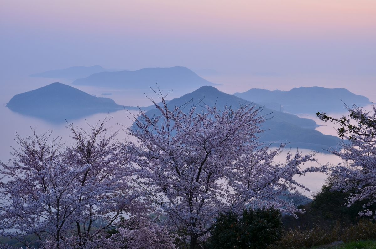 春霞の瀬戸内海 | 植物 > 桜 | GANREF
