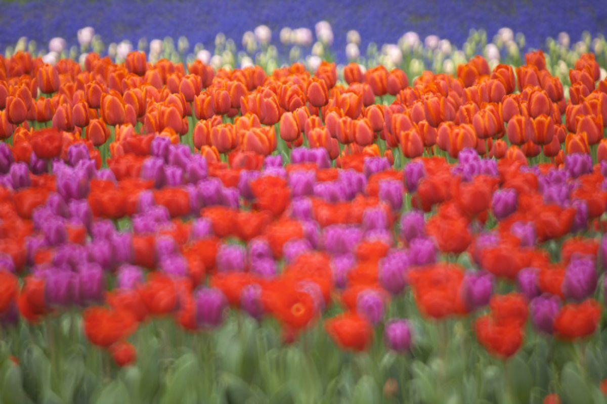 春たけなわ | 植物 > 花・花びら | GANREF