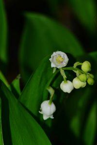 二 の 尺 伸び に の 芽 針 春雨 やわらか の くれ ない たる の ふる 薔薇
