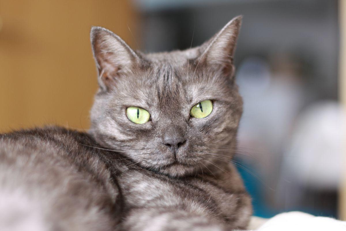 昼間の猫目   動物 > 猫   GANREF