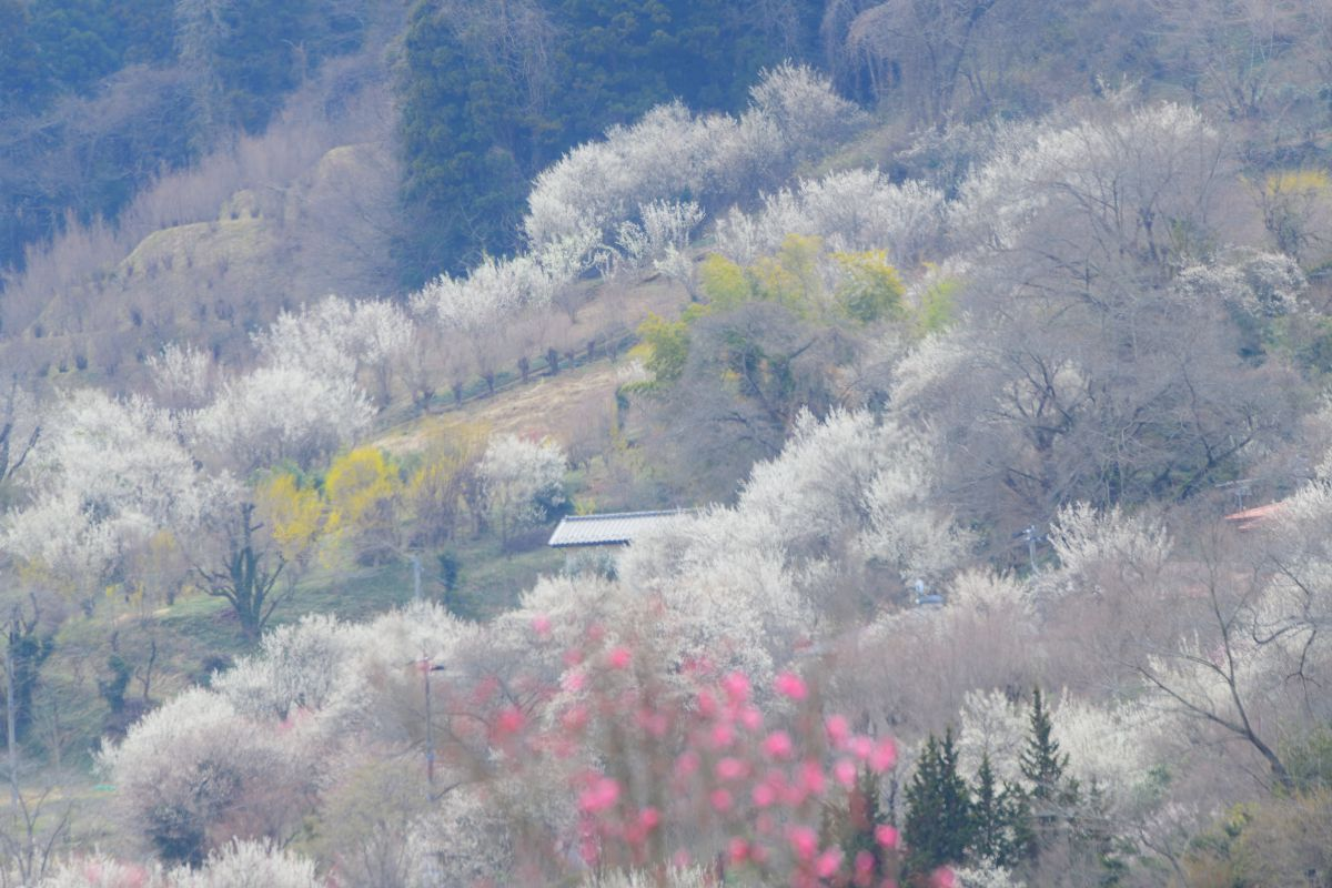 春霞 | 自然・風景 > 山 | GANREF