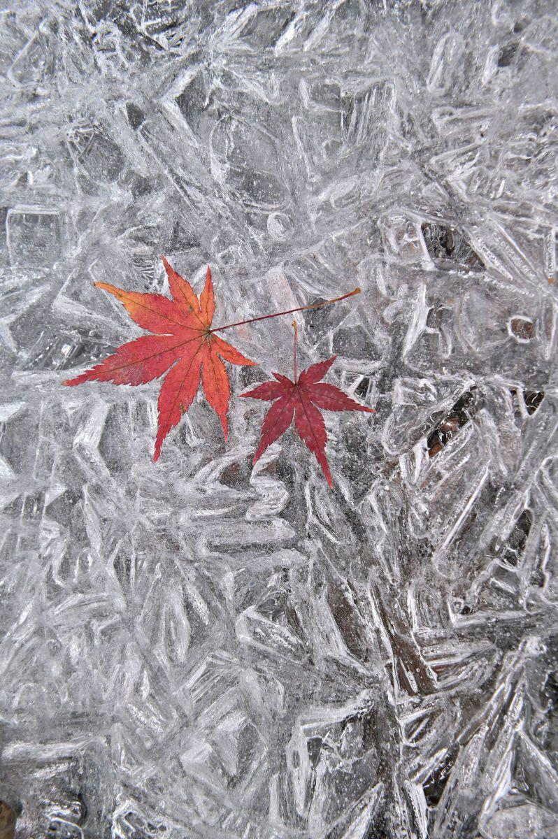 凍っ た 結晶