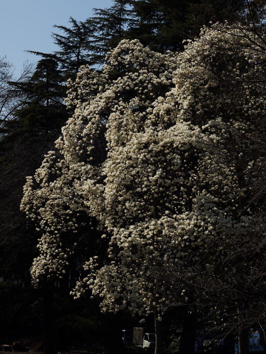 湧き起こる白   植物 > 花・花びら   GANREF