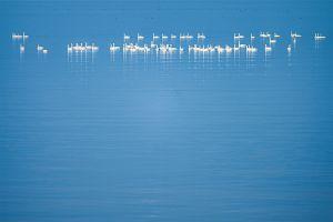 静かな琵琶湖で