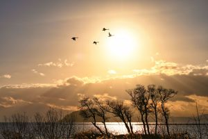 夕陽を飛ぶ