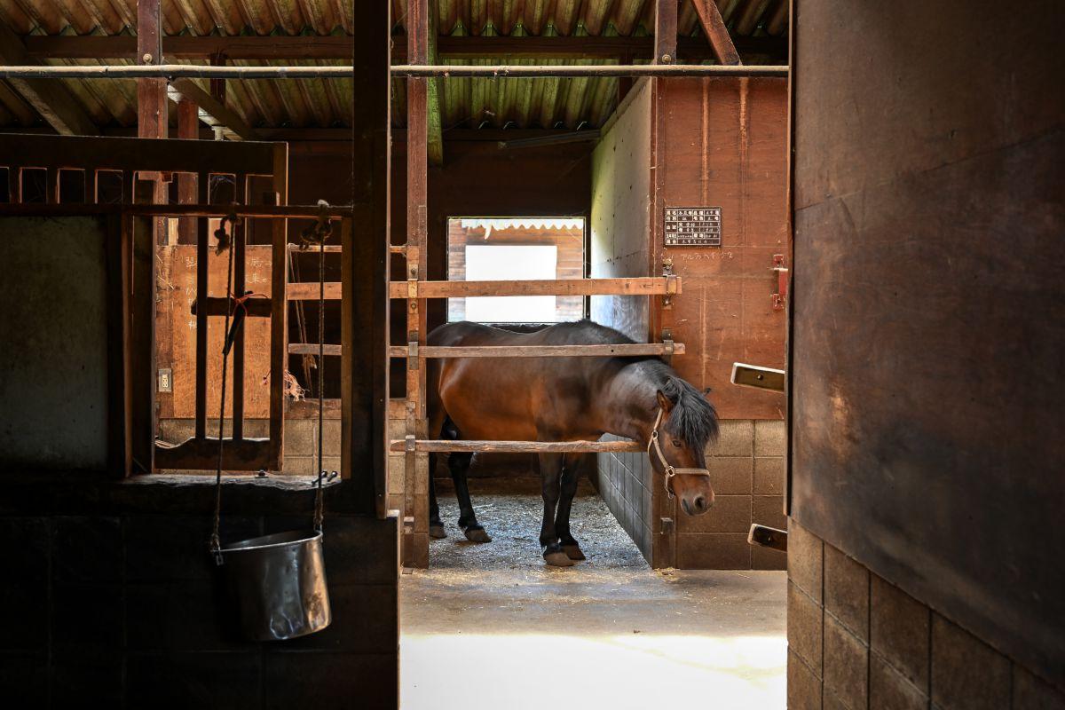 孤独の厩舎 | 動物 > その他の陸の生物 | GANREF