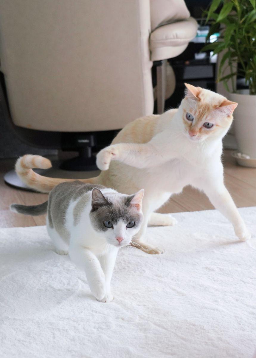 かけっこ 猫 追い