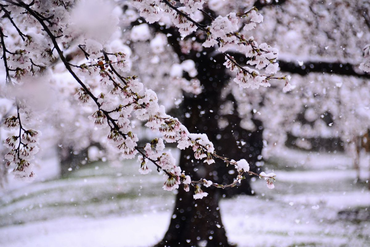 雪 なごり